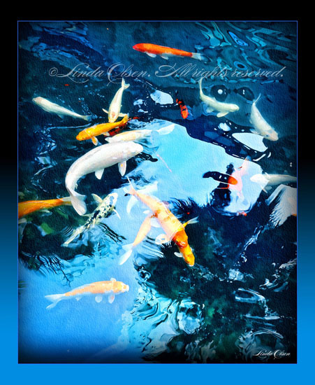 Koi fish in pond linda olsen 39 s art blog page 2 for Pool koi aquatics ltd