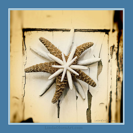 """""""Sea Stars"""" is a tribute to Christmas. I am not having a tree this year (but decorated the house) and have a large shell collection."""