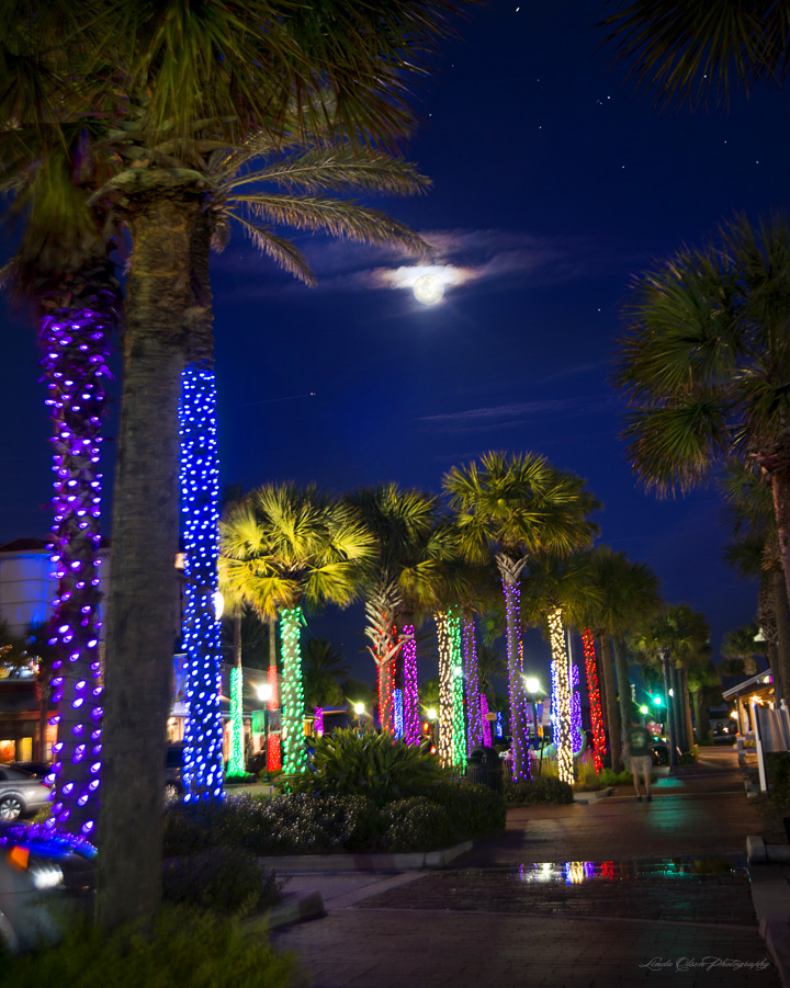 Happy holidays to you all. This is a snap of our little town Center. ONe side of the street is Neptune Beach and the other is Atlantic Beach. I was testing out my new gift to myself, a new camera body, the Nikon D800E. I should have put the shutter release cable for this night shot. There is a little shake obviously  but it does show the nice holiday lights. AFter I used my new camera for a family portrait, I discovered that I had set the camera on a high image space size of 86 MB per image and it took me many more hours to do post production converting the raw into jpg format. Every new piece of equipment offers an opportunity for education and growth There are so many tech options that it will certainly take a while to learn them all.