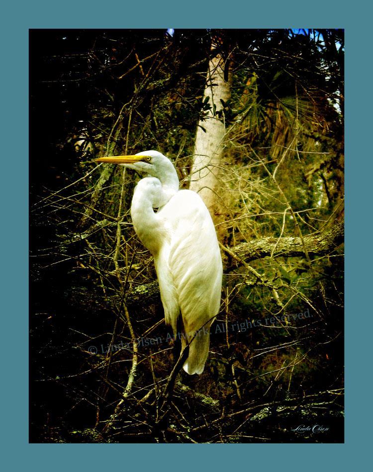 Melancholy egret