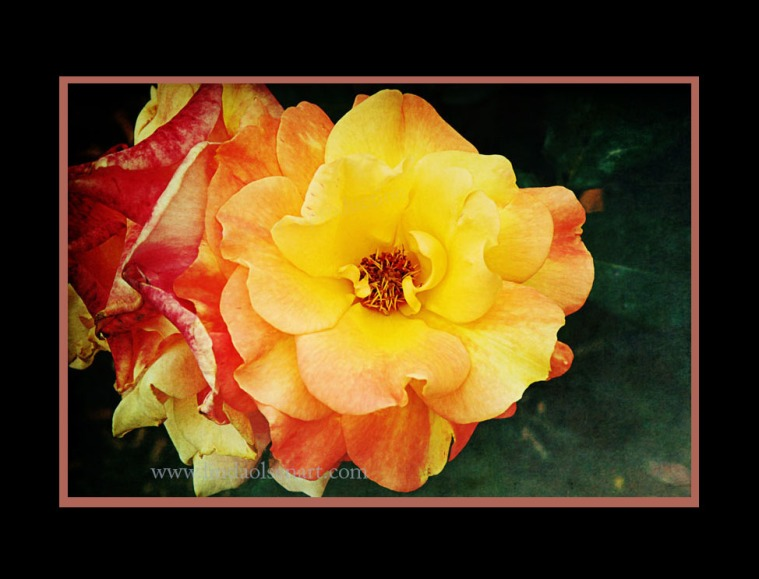 I took a few of my flower shots and did some digital enhancements, added textures, toned certain areas and played with effects. It makes me more aware of the compositions and framing as well.