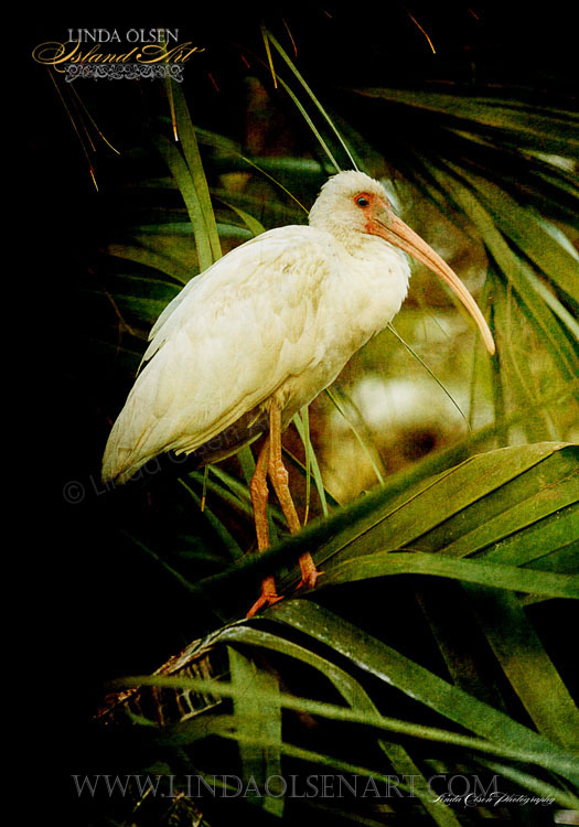 Palm Perch