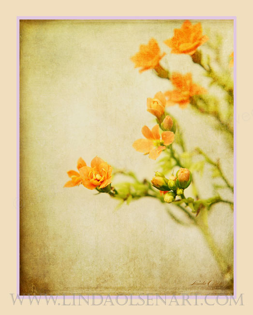 """When I photographed these delicate flower buds, I hadn't envisioned this final result. After adding a couple dozen steps and layers of texture and digital enhancements, it became more interesting and romantic. I will be testing a metallic paper for the print in 16x20"""". I envision a shabby chic white frame to complete the vintage look."""