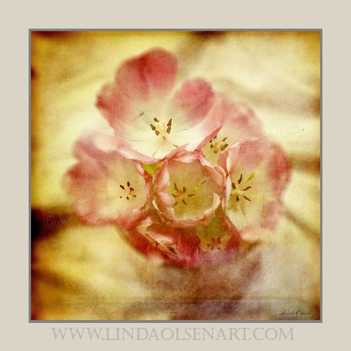 Pink tulips melancholy