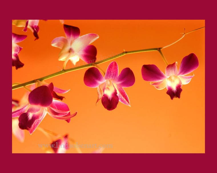 Purple orchids on orange