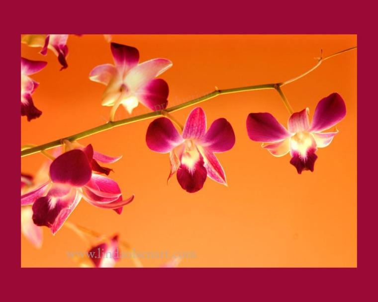 Purple orchids on orange