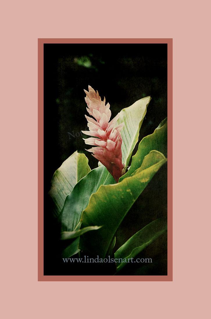 Rainforest flower2 copy 2
