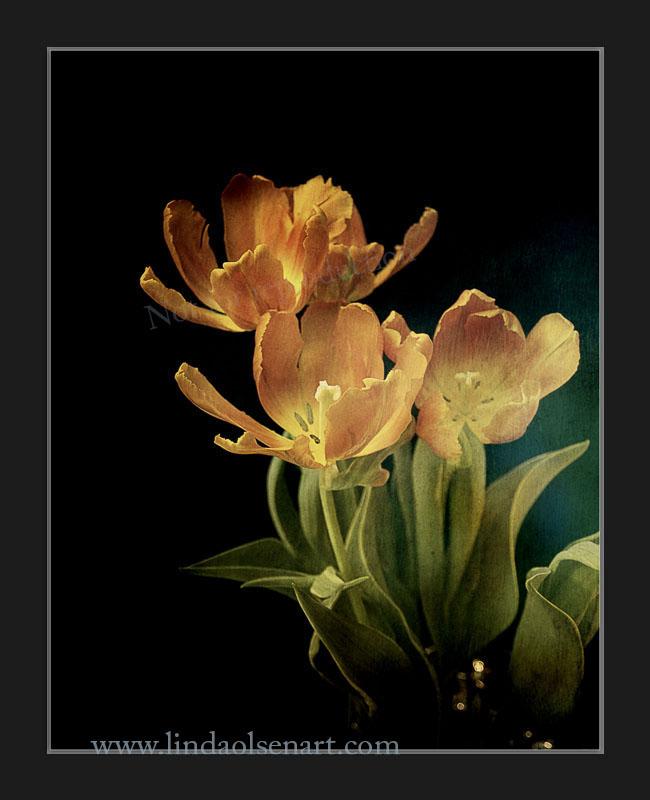 Tulips Vintage