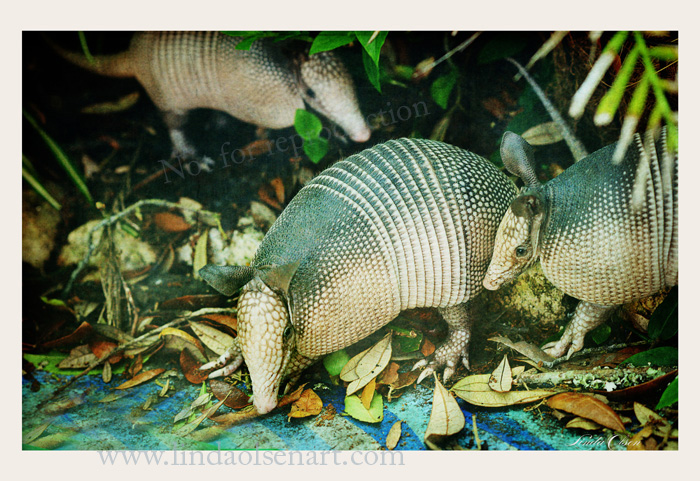 Last weekend while doing some yardwork, I heard a noise in the bushes and then out came 4 young armadillos looking for food. I think they had a home under my painting studio because when I got close, they scurried under the building. They are such odd little creatures. Hopefully, I will see them again.
