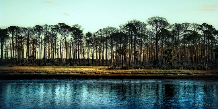 Trees on intracoastal river