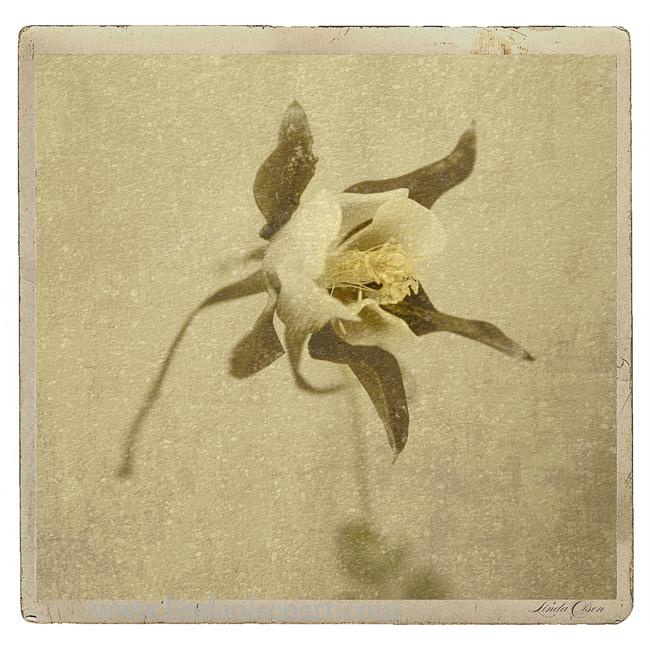 Bloom Rustica