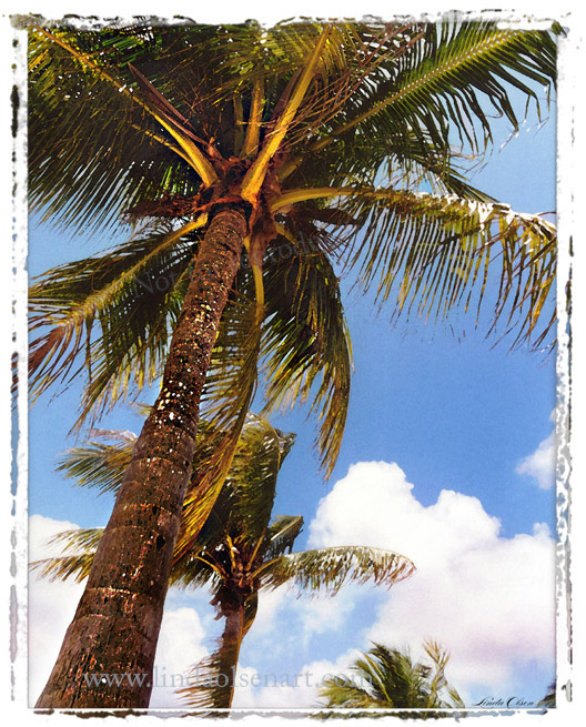 Under pennecamp palms