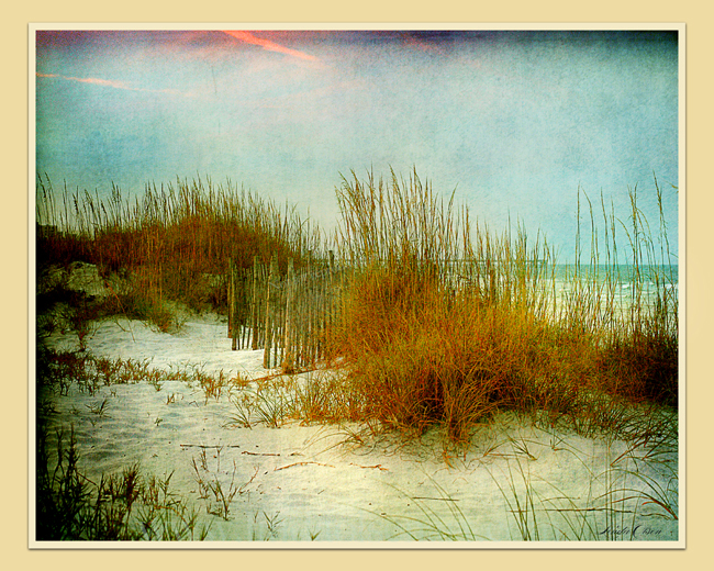 Even in the winter, the seaoats dry out but are beautiful. I tinted these images with multiple textures and layers of toning. Prints available on demand.