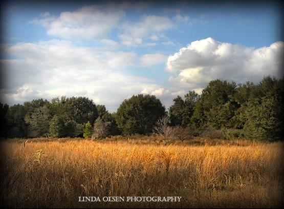 Fall grasses3