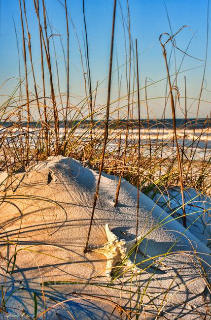 March dunes