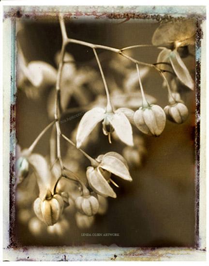 lilac sepia