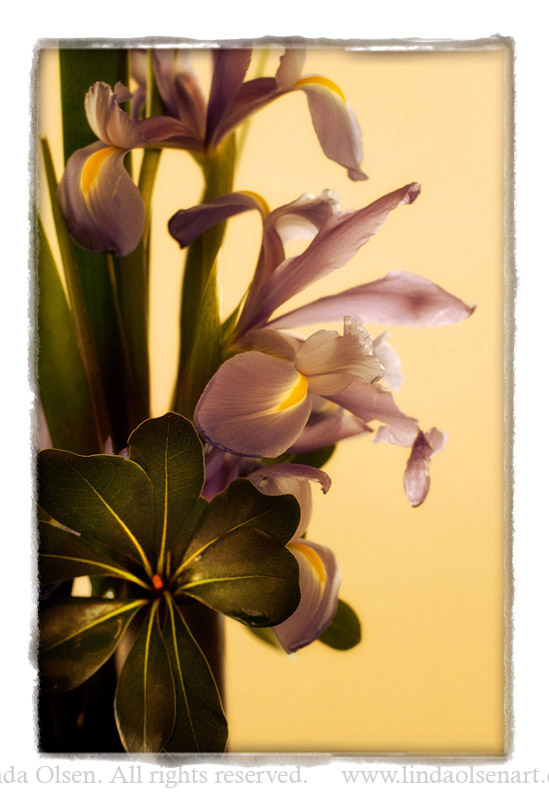 palm Beach orchid