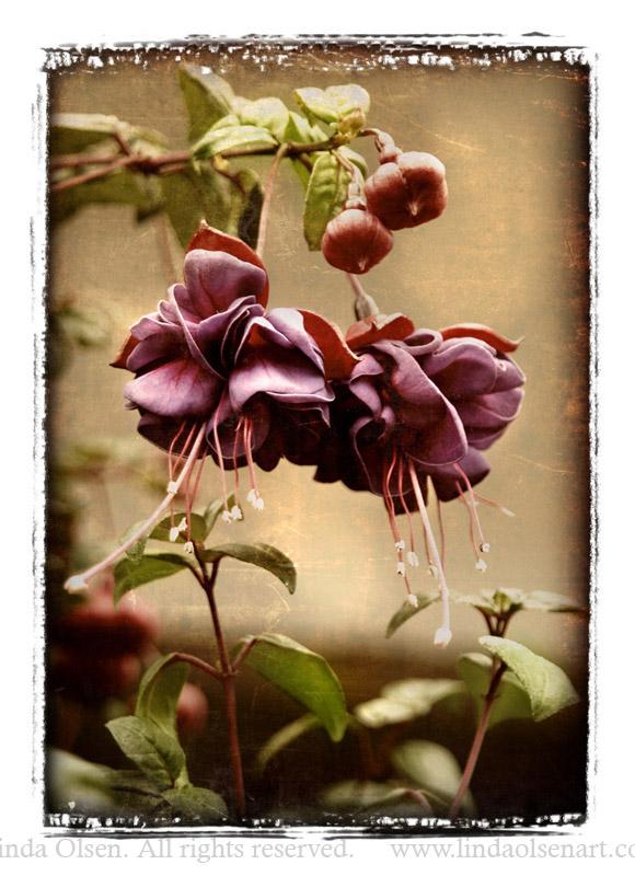 rust Dancing flower254