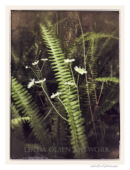 ferns and weeds