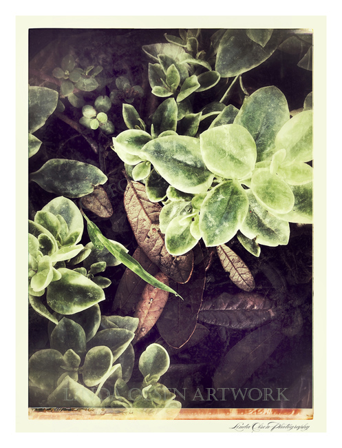succulent and leaves