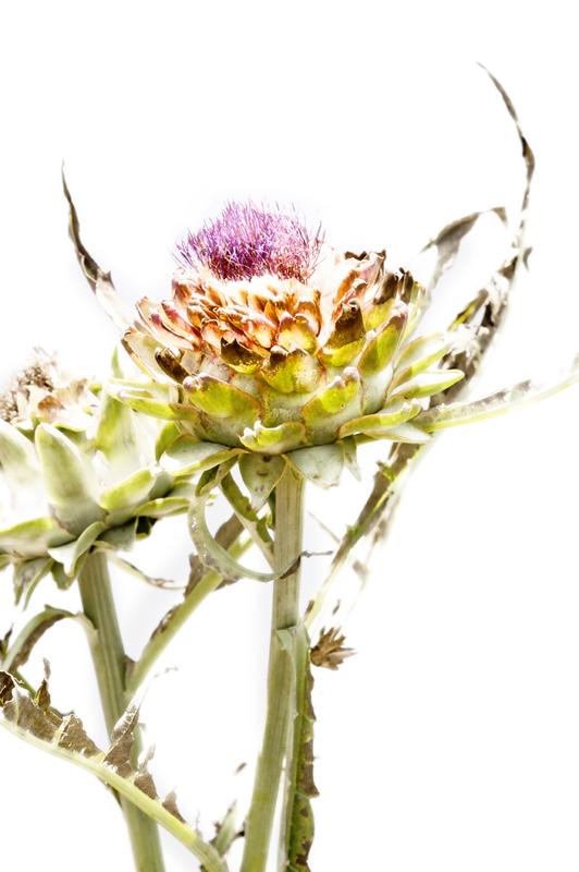 flower choke ala