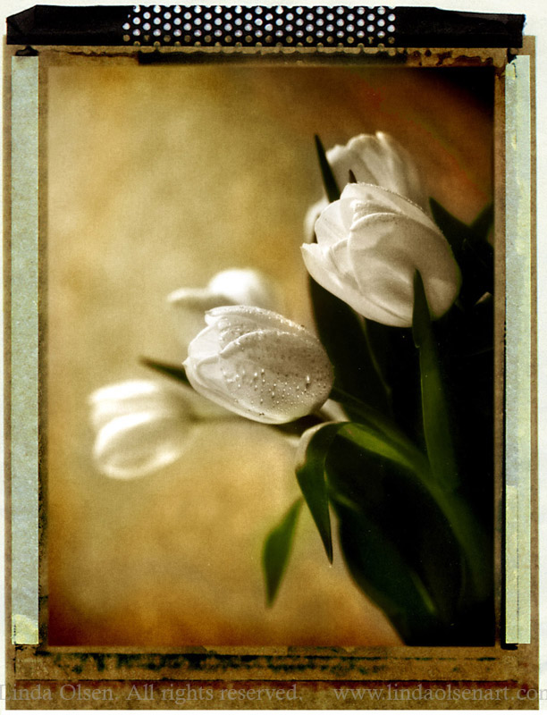 tulip side sepia