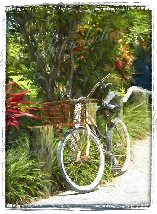 Island Bike TI fr