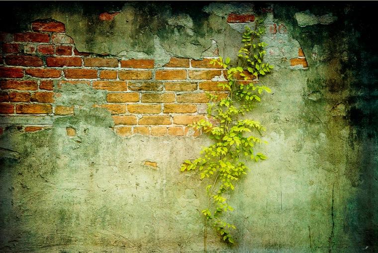 Brick Wall p