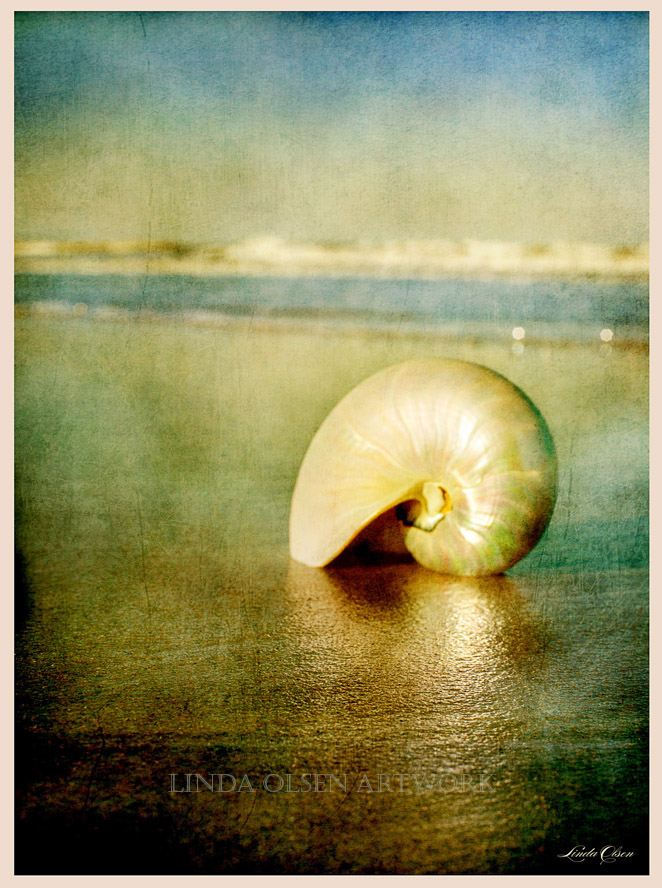 shell in sand