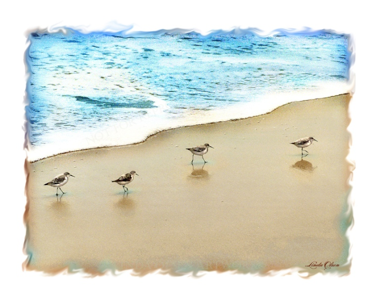 four sandpipers
