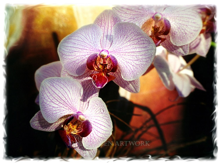 Orchid Bronze