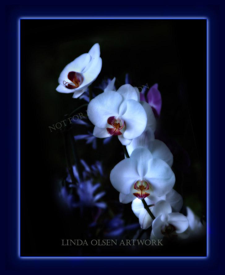 orchids blue fr