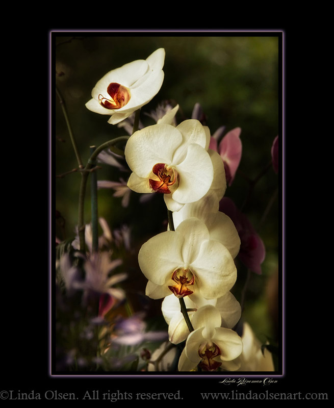 orchids with lavender