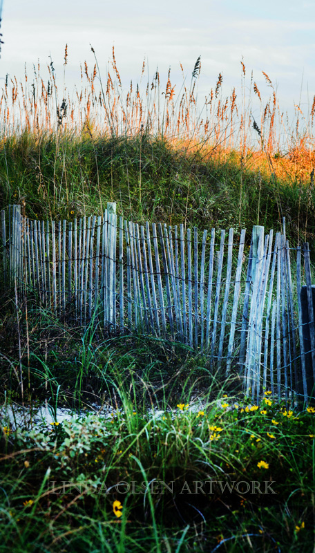 fence at dunes