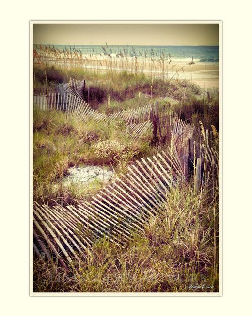Windswept fence