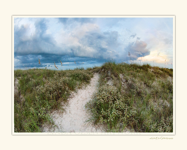 Dunes on Pine