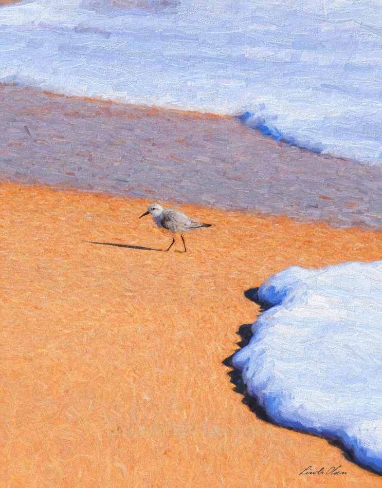 sand piper  sand