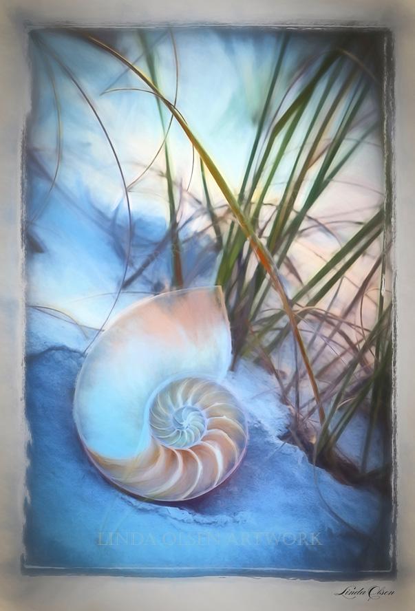 slice nautilus in dunes