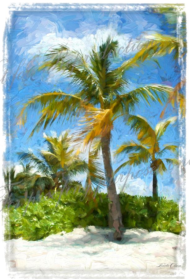 Palms and beach TIfr l