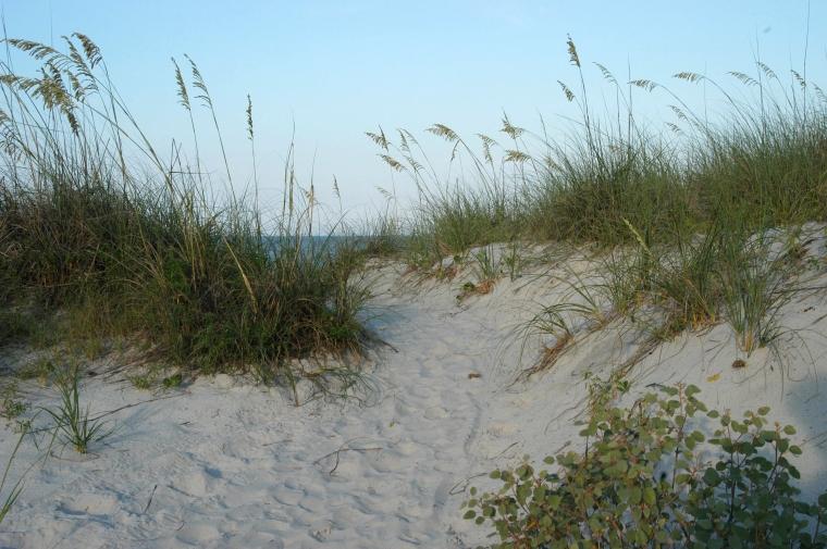 original dune