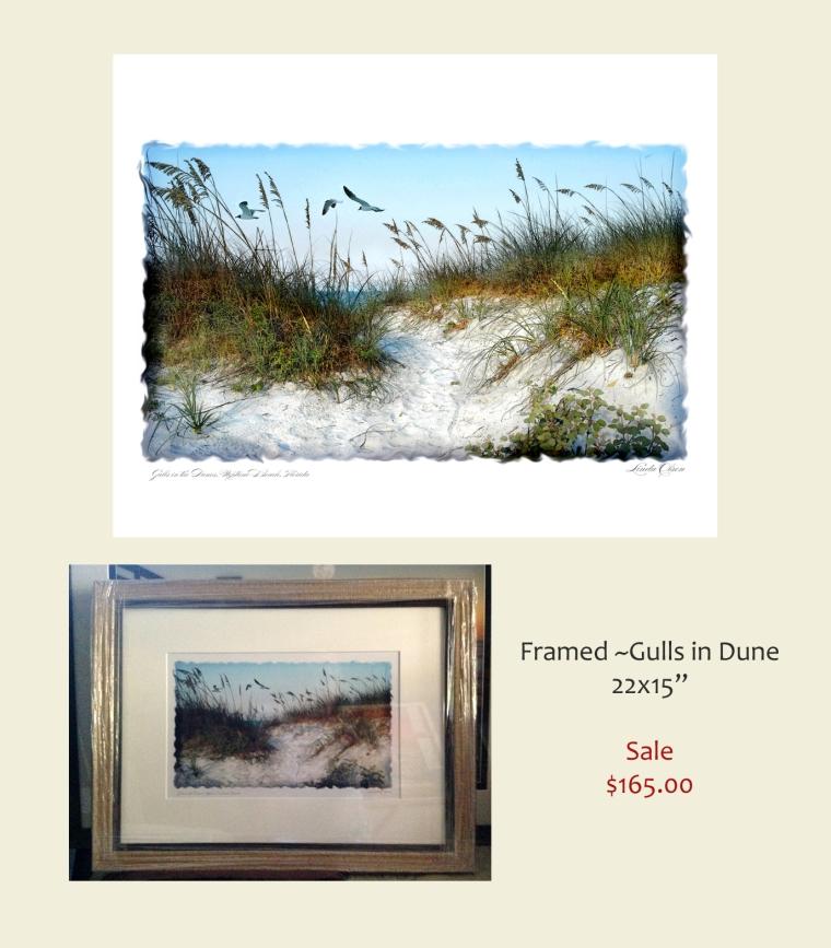 gulls in dune