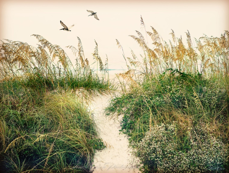 Calm Ocean with dunes and Pelicans. I envision this hand tinted photograph printed very large.