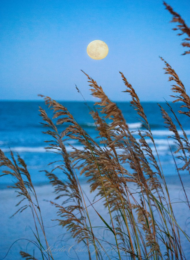 Moon and Seaoats