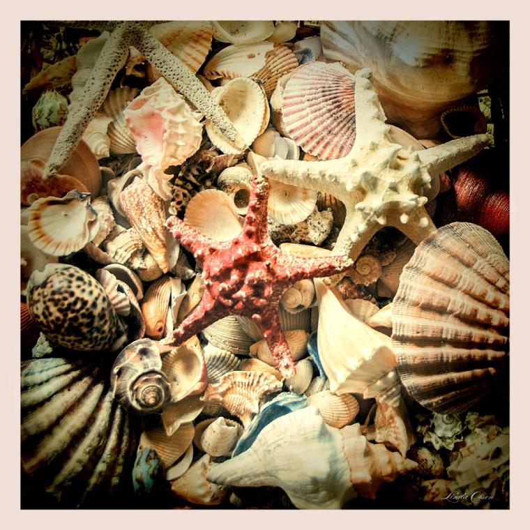 Shells Basket
