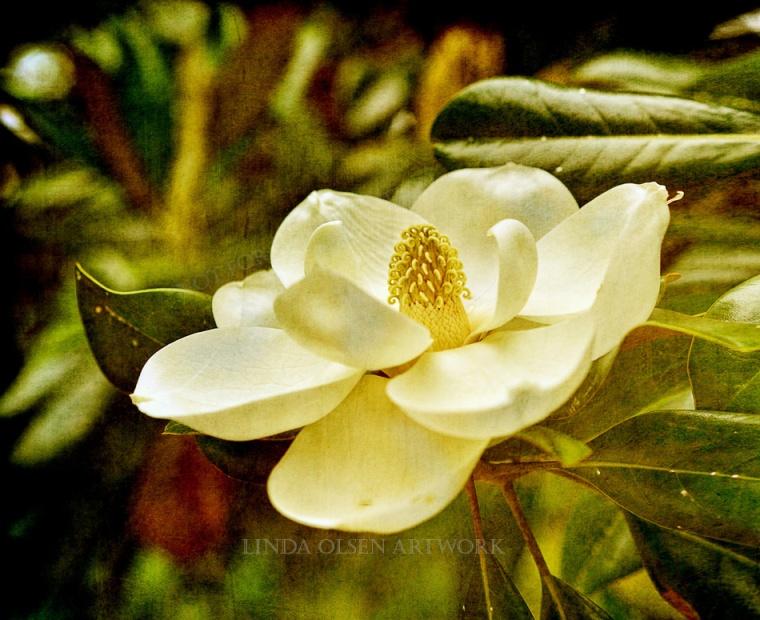 center-magnolia