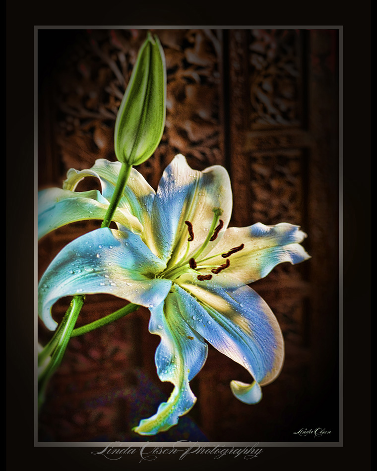 dayglow-lily