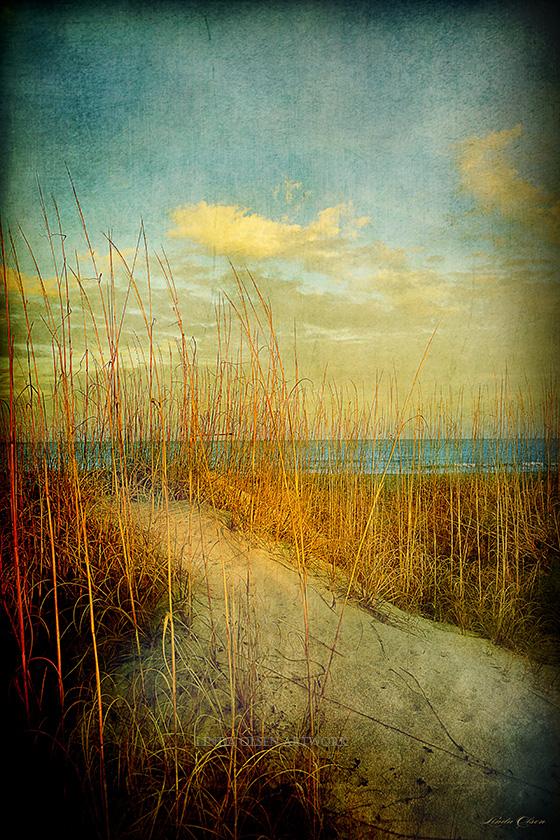 golden-dune-x