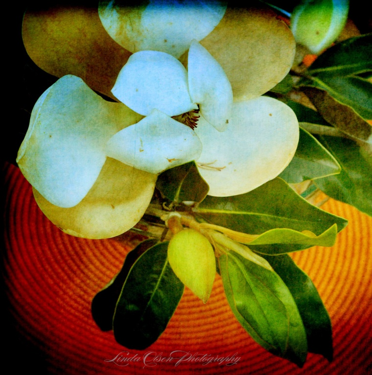 magnolia-arrangement-p