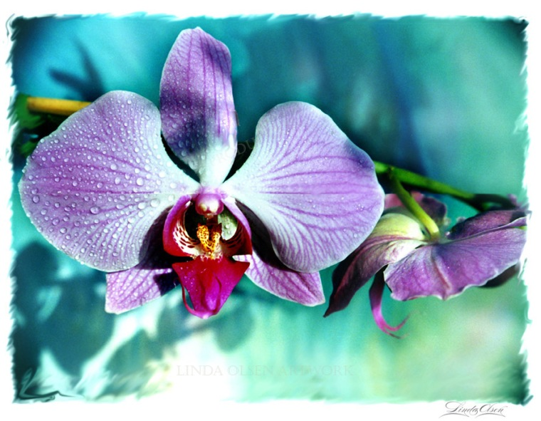 orchid-face