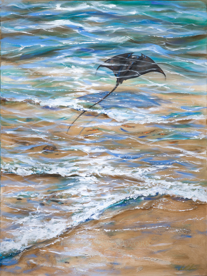 "I started the manta and sting ray collection late this summer and it is continuing with new challenges. The largest one yet is this new one of one ray gliding over the sand in the shallows of the tide. First, I paint the sandy bottom, then add shells and fish and rays with a cool blue shadows. Then I make the refraction highlights on the sand and under the ray. The last part is the reflection of the sky hitting the top of the water with highlights.  ""Ray Close to Shore"" is 36x48"".  ""Starfish Under Shallows"" and ""Starfish Fishing"" are both 24x24""."